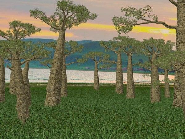 3D adansonias baobab