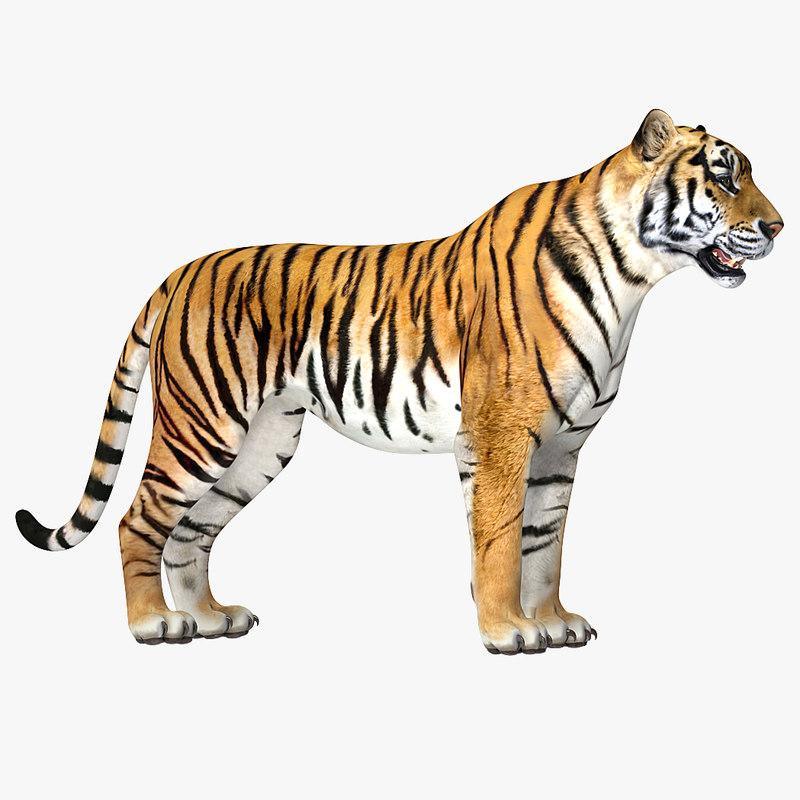 3D tiger rigged model