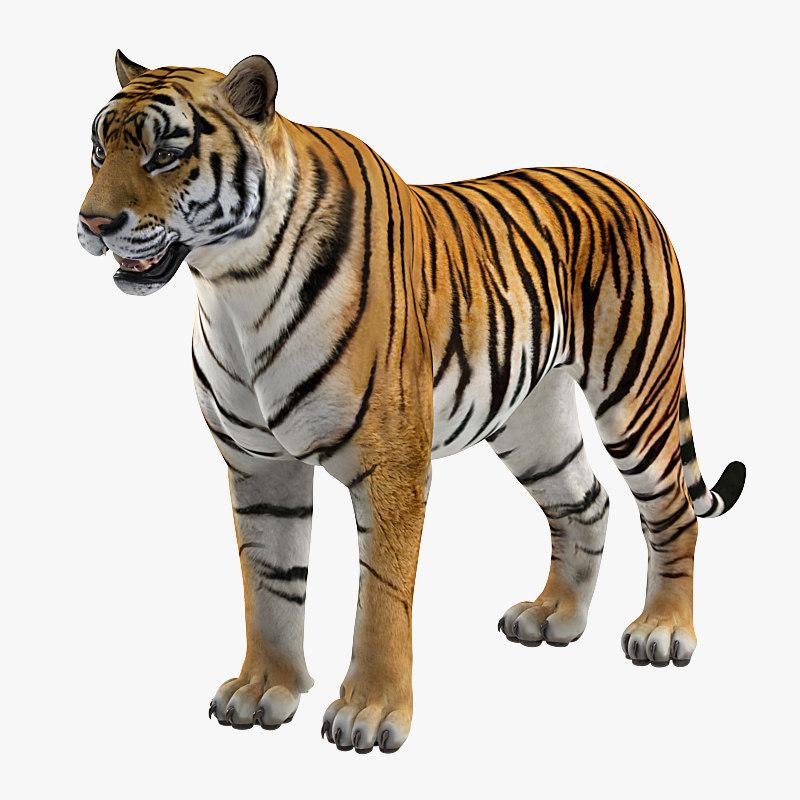 3D tiger rigged
