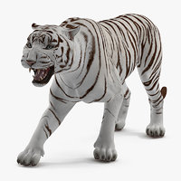 3D white tiger rigged model