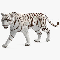 white tiger rigged 3D model