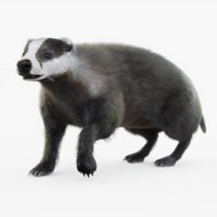 Badger (Rigged) (Fur)