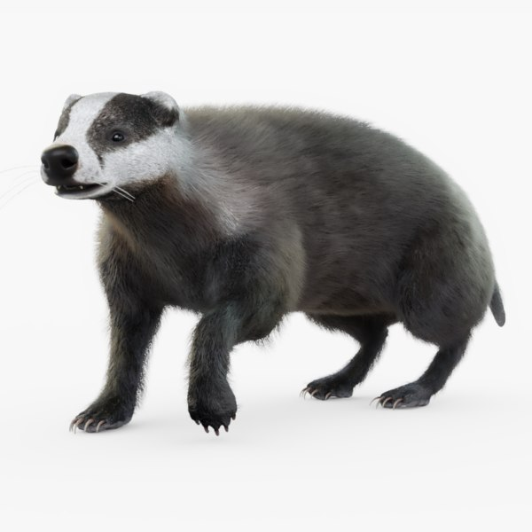 3D rigged badger