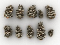conifer cone pack 10 model