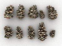 conifer cone pack 10 model