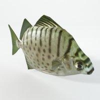 3D argus fish