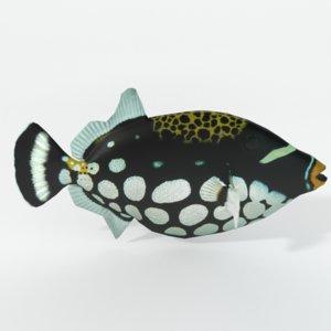clown crossbow fish 3D model