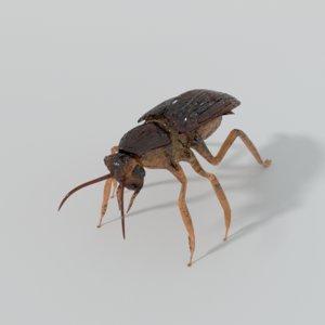 roach cockroach 3D model