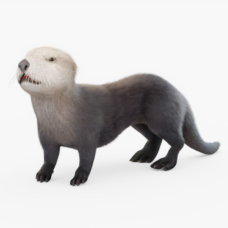 rigged sea otter model