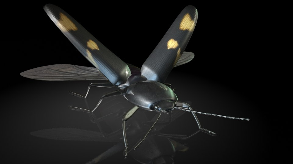 elater clickbeetle insects 3D