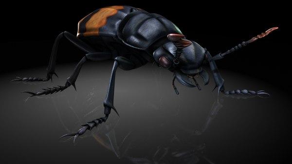 3D burying beetles hammer