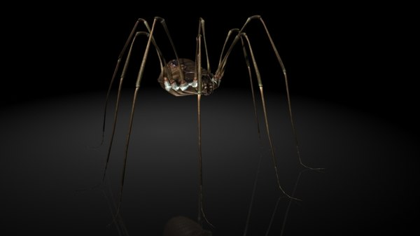 3D arachnid spider insects
