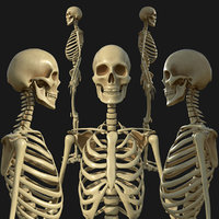 Skeleton Rigged