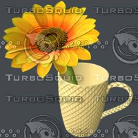 Sunflower in cup