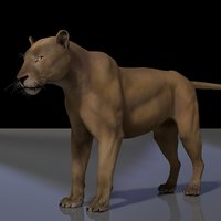 lion rig studio license 3D model