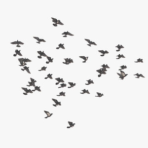 3D flocking pigeons flying large
