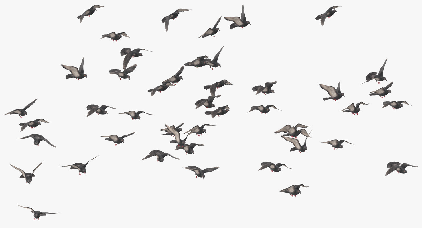 flocking pigeons flying large 3D model