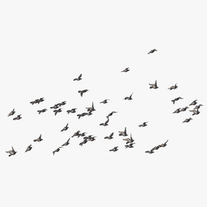 flock flying large 03 3D