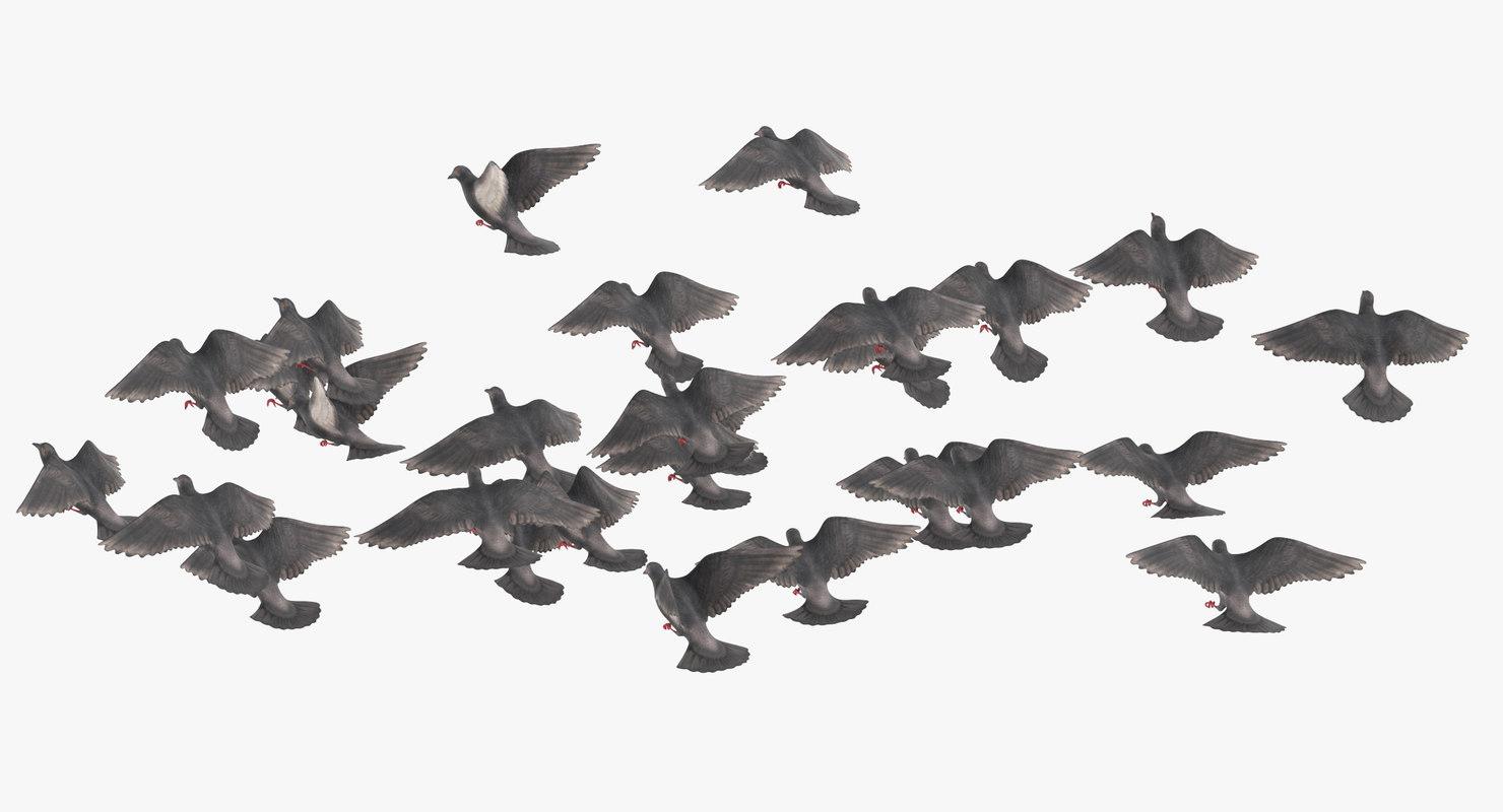 flock flying medium 02 3D