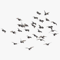 Medium Flock Pigeons Flying 03
