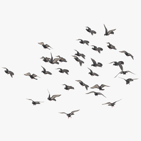 3D model flock flying medium 03