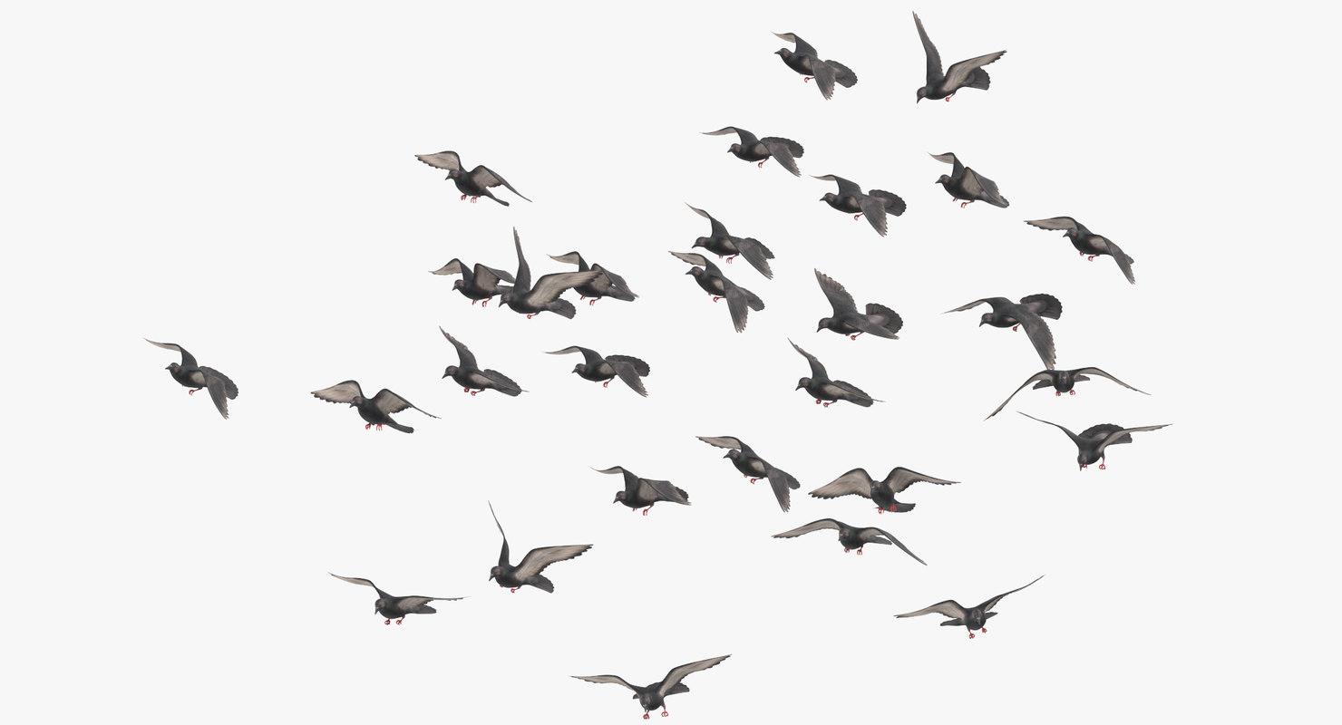 3D model flock flying medium 03