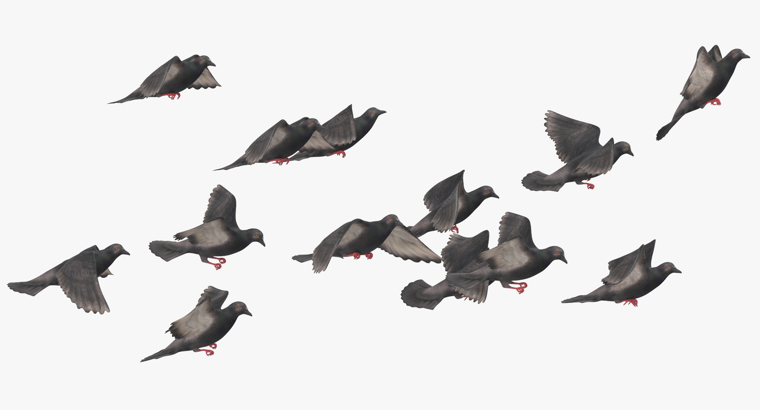 3D flock flying pigeons small