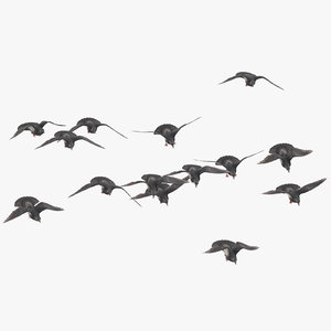 flock flying pigeons small 3D