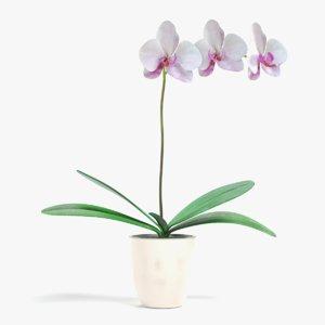 3D orchid pbr