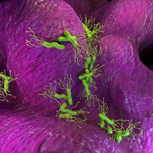 helicobacter 3D