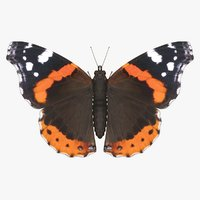 3D realistic red admiral model