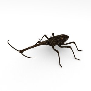 3D new zealand giraffe weevil model