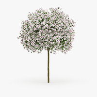 3D hibiscus model