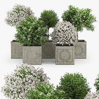 hibiscus 3D model