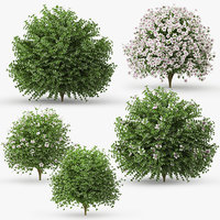 3D model hibiscus bush