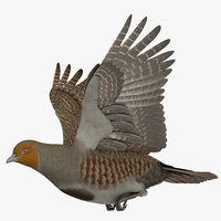 3D model rigged grey partridge