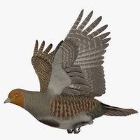 3D model rigged grey partridge