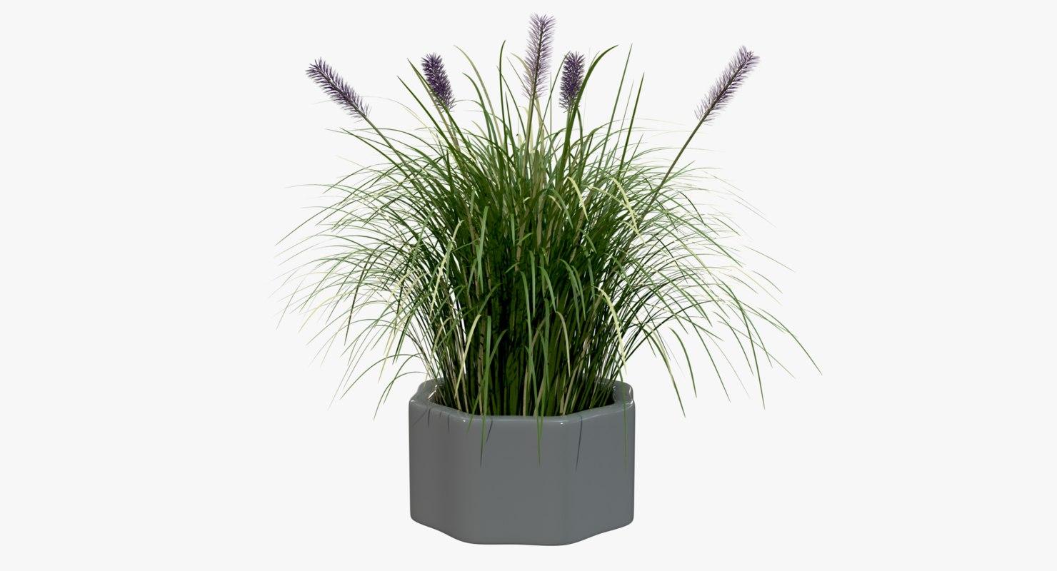 clump pampas grass flower 3D model