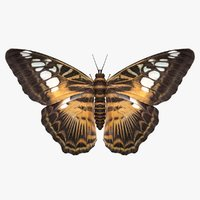3D model realistic parthenos sylvia