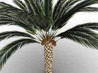palm tree dates model