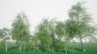 birch tree 3D
