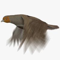 3D grey partridge animation