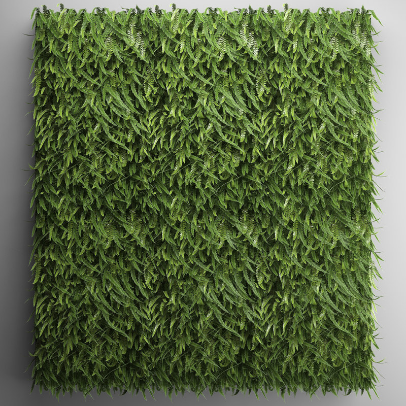vertical gardening fern wall model