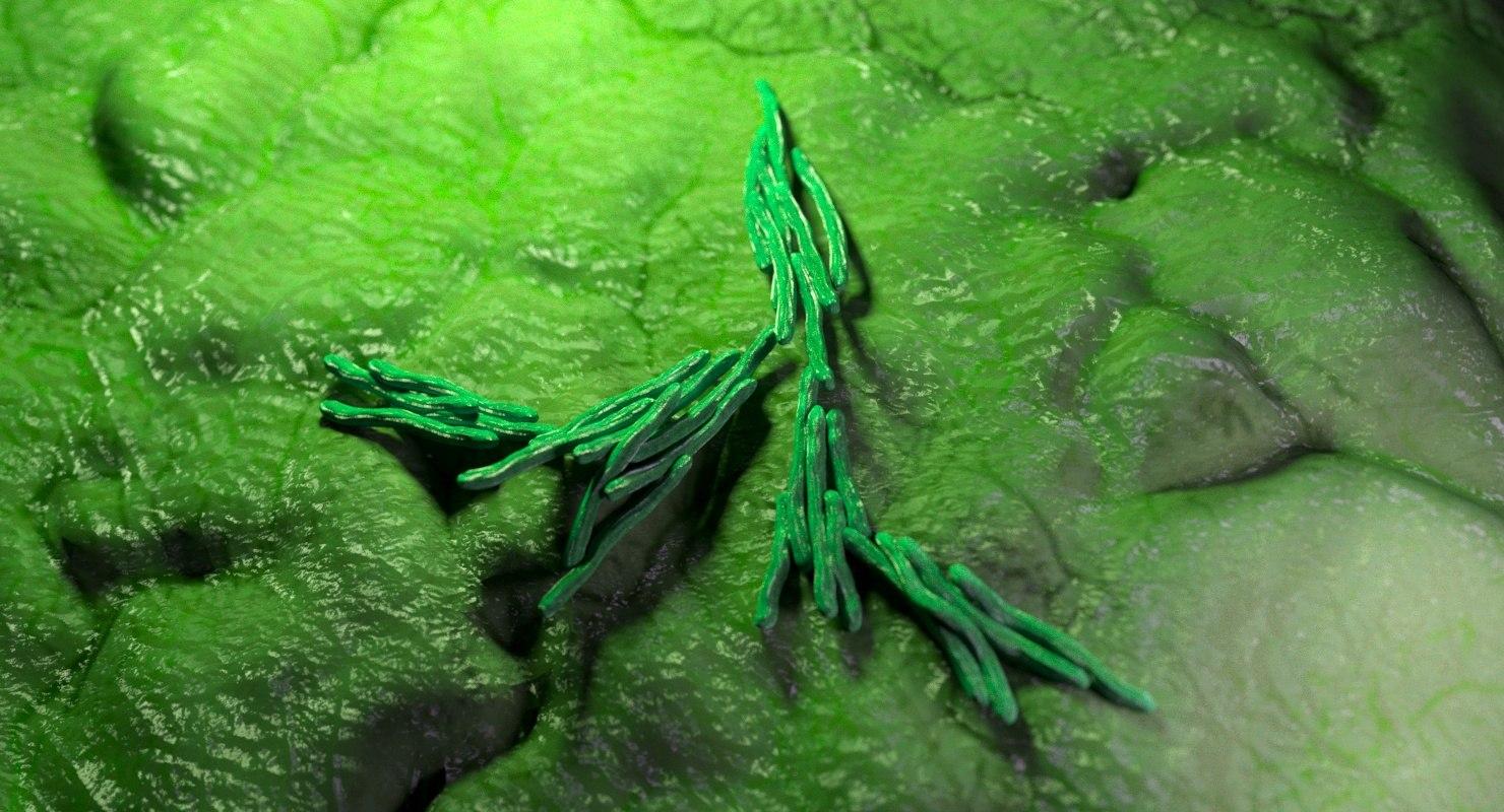 mycobacterium bacterium 3D
