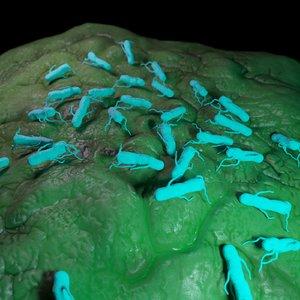salmonella 3D model