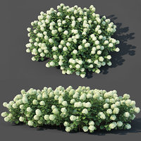 Hydrangea arborescens # 2. Customizable