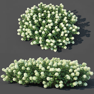 bush blossom 3D model