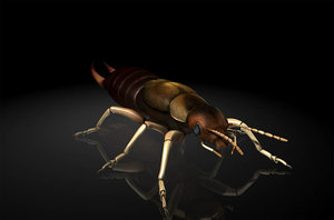 earwigs larvae insects 3D model