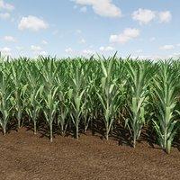 farm sugarcane crops 3D model