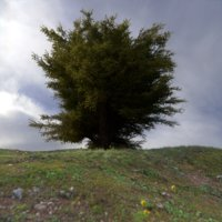 3D model procedurally tree